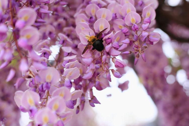 Spring EyeEm