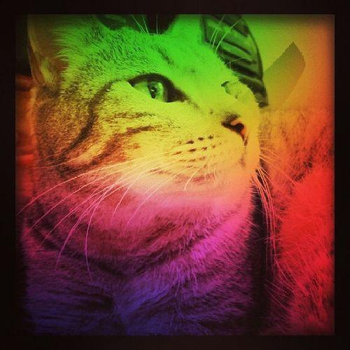 The color fat cat