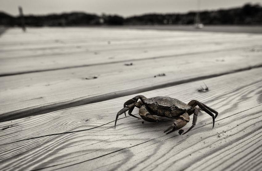 Taking Photos Kungshamn Crab Krabba Sommar Summer FUJIFILM X-T1 XF16mmF1.4 Nature Sweden