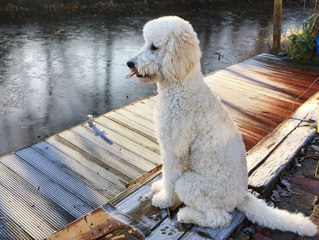 One Animal Animal Themes Wood - Material Water Dog Lake Mammal Domestic Animals Outdoors Pets Nature No People Day Close-up