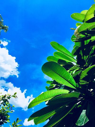 Leaf Plant Part Sky Plant Growth Green Color Nature Freshness Leaves Cloud - Sky Blue Day No People Outdoors