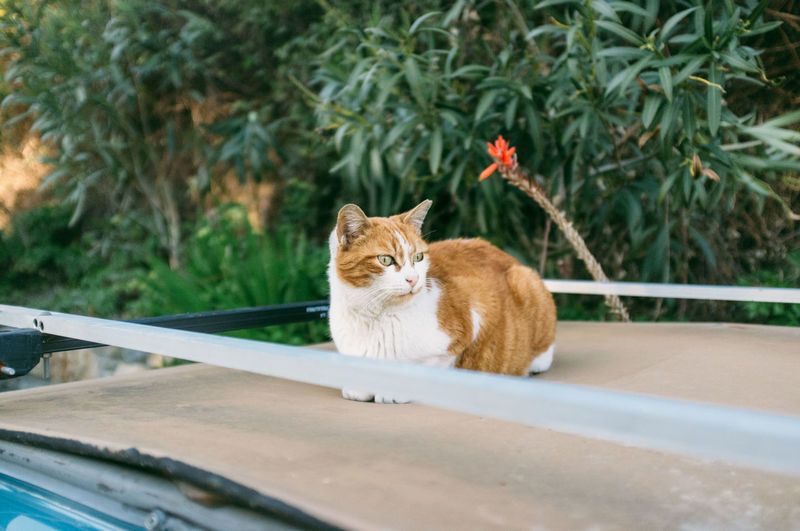 Bussana Vecchia Cat Day Domestic Cat Feline Nature Plant Sitting