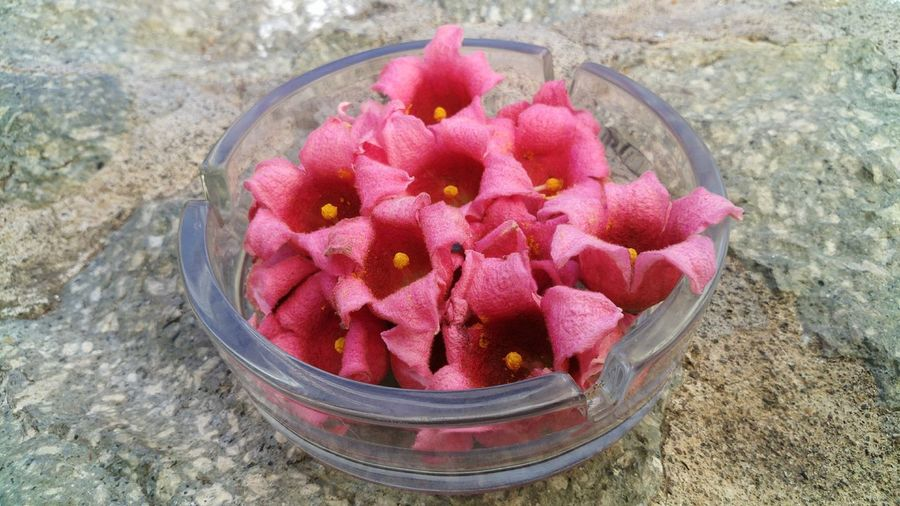 High angle view of pink flowers in bowl
