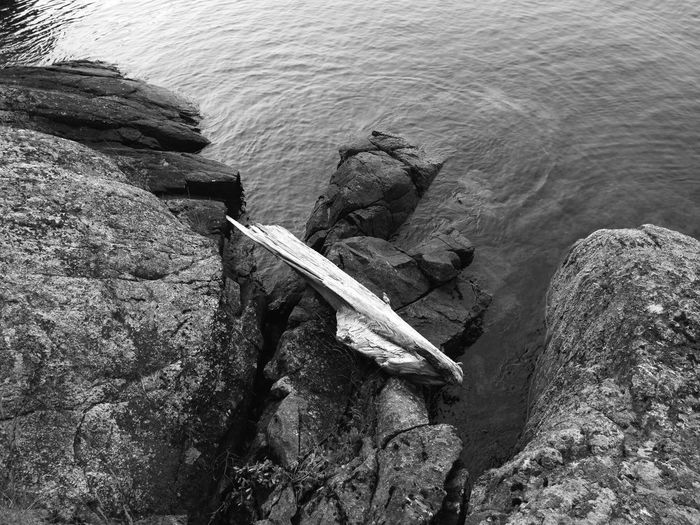 High angle view of driftwood in sea