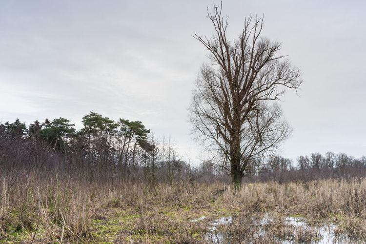 Braakman (north, swampy part), Biervliet EyeEm Market © EyeEm Premium Collection Plant Sky Tranquility Landscape Scenics - Nature Grass Bare Tree Tree Sony A77ii Zeeuws Vlaanderen Zeeland  The Netherlands Windy Day
