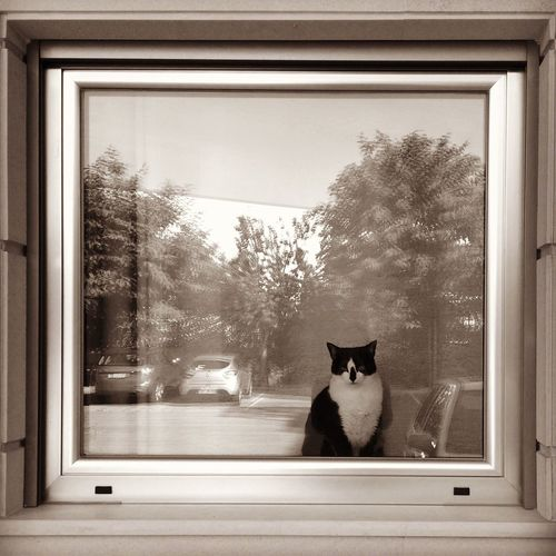 Portrait of cat looking through window with reflection