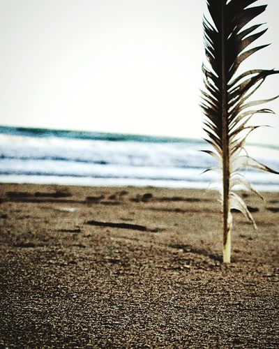 Sand Beach Nature No People Day Beauty In Nature Sea Scenics Outdoors Close-up EyeEmNewHere Feather