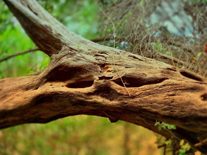 Focus On Foreground Tree Nature Day Close-up No People Plant Trunk Tree Trunk Land Outdoors Rough Textured  Branch Forest Sunlight Selective Focus Wood Wood - Material Tranquility
