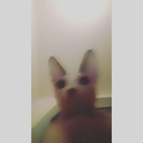 Первое самостоятельное кото-селфи селфи котыселфи Коты себяшка