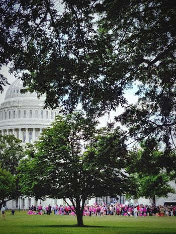 a peoples' house Architecture Capitol Capitol Building Capitol Hill Washington, D. C. Planned Parenthood Healthcare Senate House Of Representatives Congress Tree Flower Growth Outdoors Travel Destinations Day Built Structure Nature Plant Flowerbed Building Exterior Beauty In Nature Real People Sky City