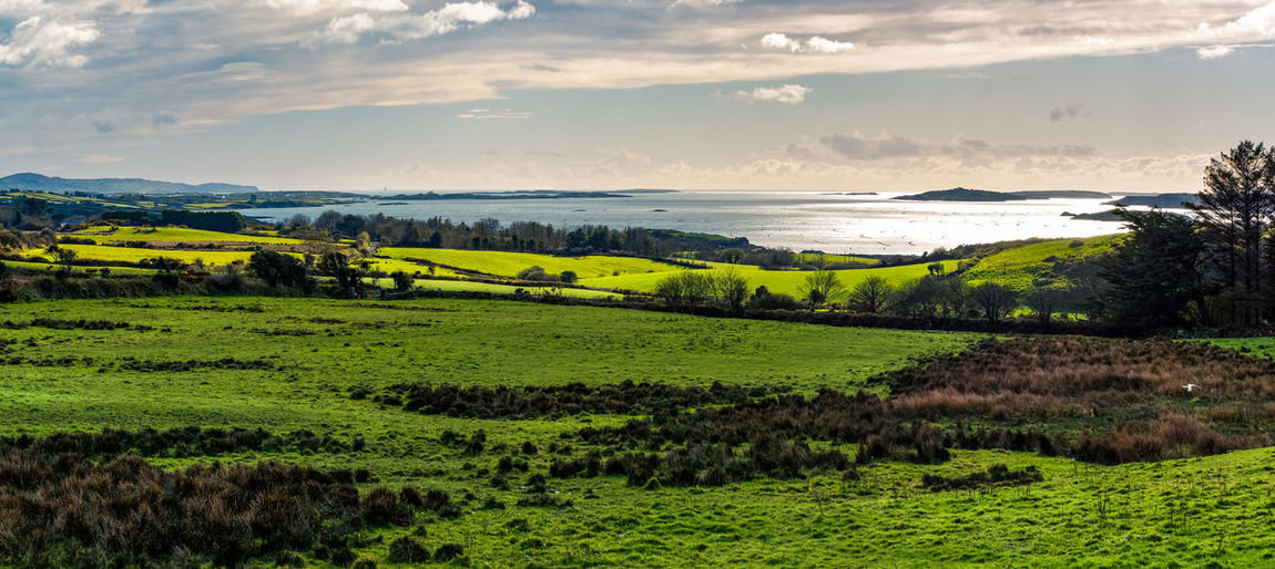 Roaringwater Bay Agriculture Beauty In Nature Cloud - Sky Day Field Grass Green Color Ireland Landscape Nature No People Outdoors Roaringwaterbay Rural Scene Scenics Sea Sky Tranquil Scene Tranquility Tree Water West Cork