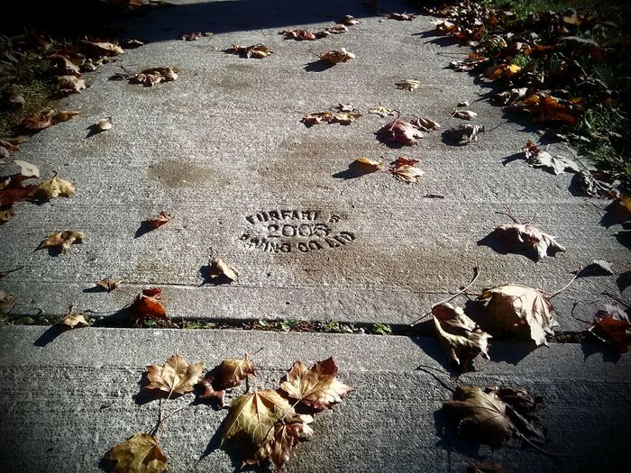 Close-up Fallen Leaves Group Of Objects Leaf Nature No People Shadow Sidewalk Impressions