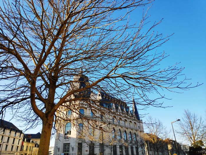 ville de chartres, tree Tree Shining Architecture City Chartres Branch Sky Architecture