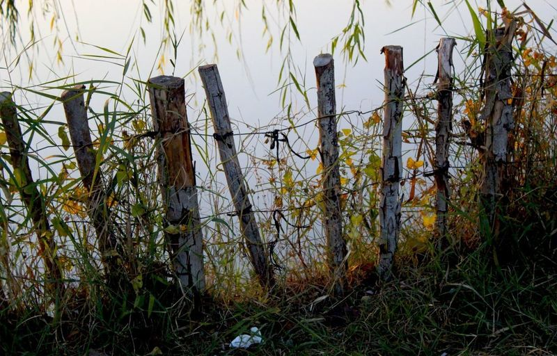 Wooden fence on field by lake