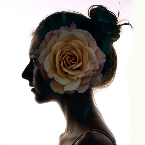 - silhouette project Backlight Blooming Blossom Close-up Design Dubleexposure Flower Flower Head Fragility Leaf Petal Pink Pink Color Portrait Rosé Rose - Flower Single Flower