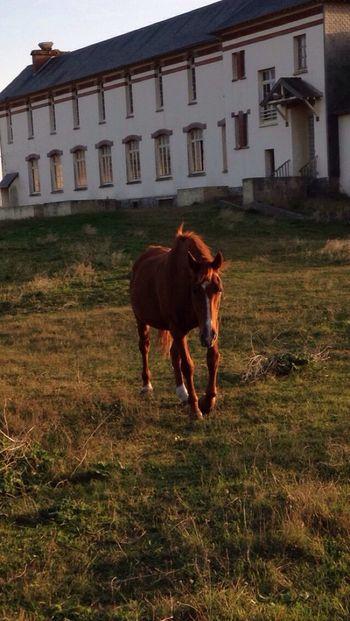 Horse Sunset End Day Beach Sea