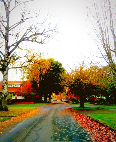 Road Tree The Way Forward No People Bare Tree Outdoors Sky Day Backgrounds Growth Freshness Outdoors Photograpghy  Eyeem Market Place EyeEm Photo Of The Day EyeEm Master Class EyeEm Best Edits The Week On EyeEem Telling Stories Differtenly Maximum Closeness Multi Colored Small Town Stories Essence Of Fall Fall Collection Fall Is Here. Autumn