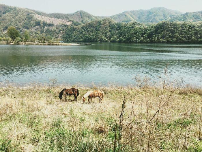 IPhoneography View South Korea Jarasum Horse Travel