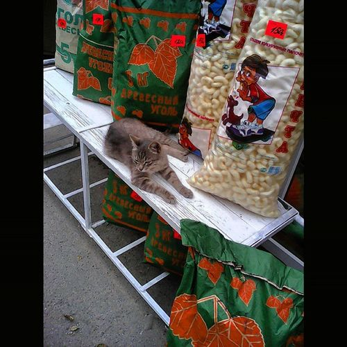 Хорошо устроился...😼😸😹КотНаПрилавке котнаприсосках КотэОбормотэ Борзотаа Борзота КотБорзокот ЛюбителямКошек СерыйКот GreyCat Katty Kitty kittyCat CassyCat katze katzetagram Katzen CatLovers catsagram_ catsagram catsofinstagram catsoninstagram catsurday CoolCat CatOfTheDay SquareInstaPic