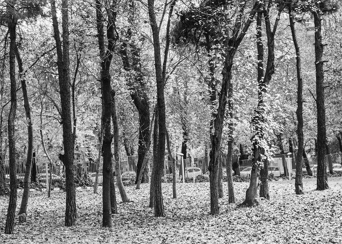Last Fall Tree Trunk Nature