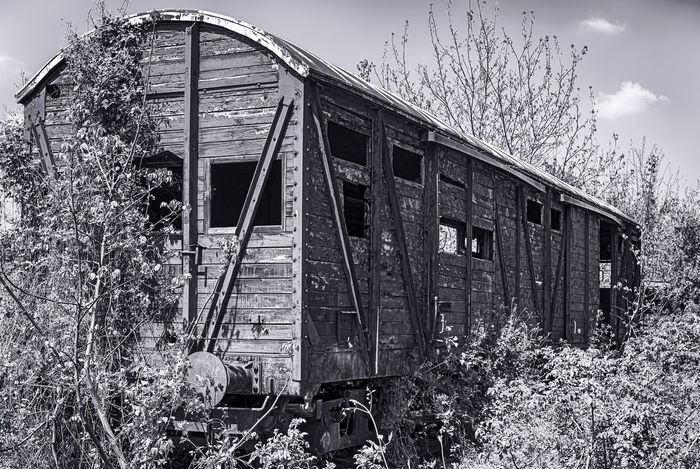 Old wooden railway wagon derelict captured by vegetation Abandoned & Derelict Black & White Monochrome Photograhy Abandoned Architecture Bad Condition Black And White Black And White Photography Built Structure Damaged Day Monochromatic Monochrome Monochrome _ Collection Monochrome_life Nature No People Obsolete Outdoors Plant Railway Railway Station Run-down Sky Transportation Tree Vintage Wagon Wooden Railway
