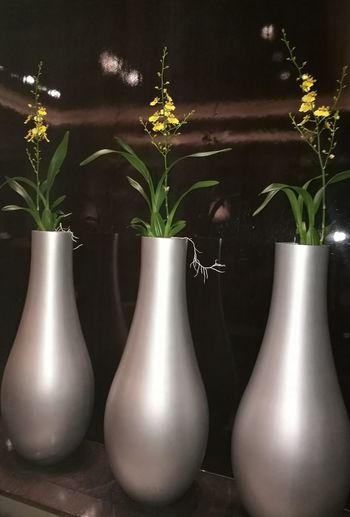 Vase Table Indoors  Herb No People Black Color