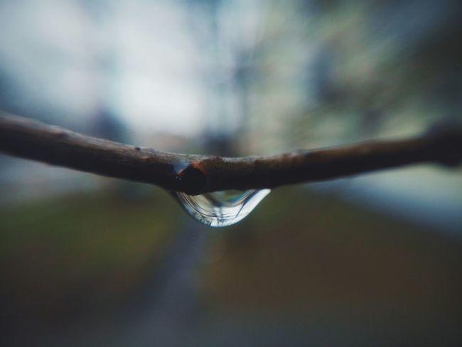 Drops Drop капля Дождь Rain Branch Taking Photos Meizumx4 Mobilephotography Spring
