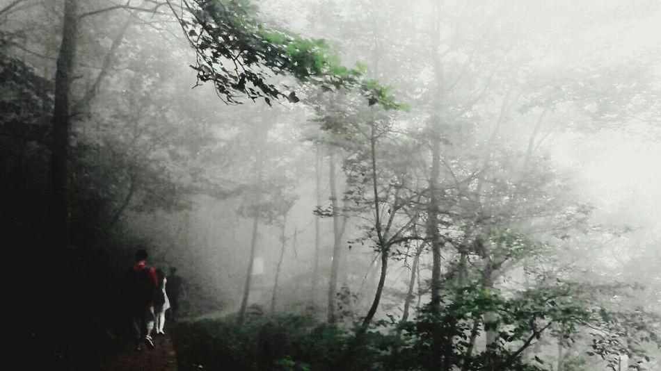 和伙伴们行走在漫着雾气的山道Zhejiang,China Moganshan Classmates Foggy Morning Nature Walking In The Woods EyeEm Nature Lover Original Experiences Showcase June
