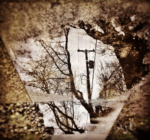 Reflection of trees in a puddle shot. Rainy Day Puddle Reflections Puddle Shot Puddle Puddleography Reflection_collection Reflections Reflections In The Water Raining Day Reflection Of Trees Treescollection Sepia_collection