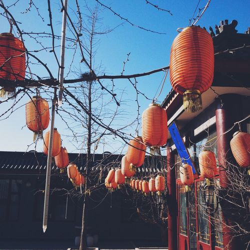 Photographic Memory China Chinese Chinese New Year Hutong Winter 中国 春节  Red Chinese Lanterns Outdoors January Yard Trees Winter Trees Deterioration Blue Sky Culture Festival Spring Festival No People Up Close Street Photography 43 Golden Moments