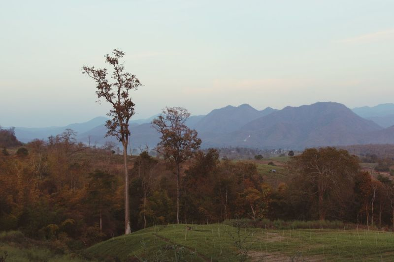 Landscape Outdoors Mountains Trees No People Fall Season Nature in North Thailand South East Asia
