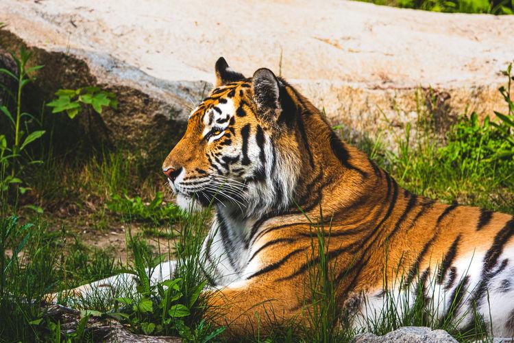Cat looking away in zoo