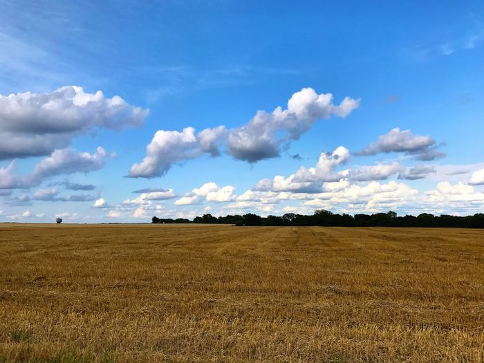 Field Sky Landscape Cloud - Sky Agriculture Day Tranquil Scene Rural Scene Scenics No People 3XSPUnity Tranquility Wheat field with a great sky