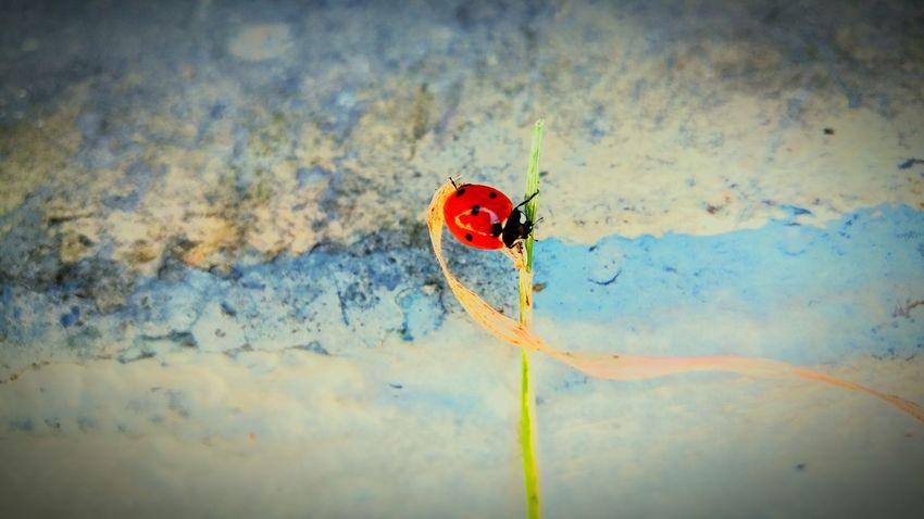 Ladybeetle Bugout Treethugger Backyard Garden Naturerox Summertime Circle