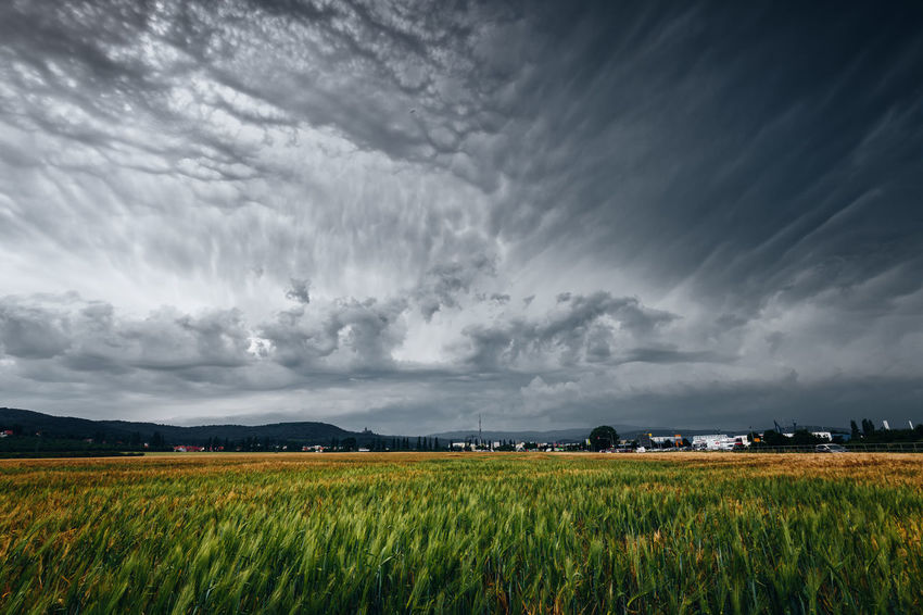 Storm is coming Weather Agriculture Beauty In Nature Cloud - Sky Crop  Environment Farm Field Germany Growth Harz Harzmountains Land Landscape Nature Outdoors Plant Rural Scene Scenics - Nature Sky Storm Storm Cloud Tornado Tranquil Scene Tranquility