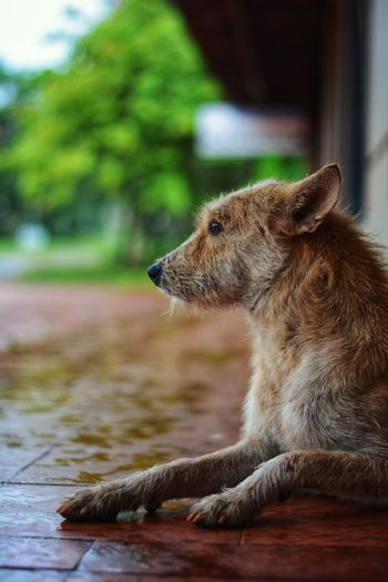 Side view of dog looking away while sitting outside house