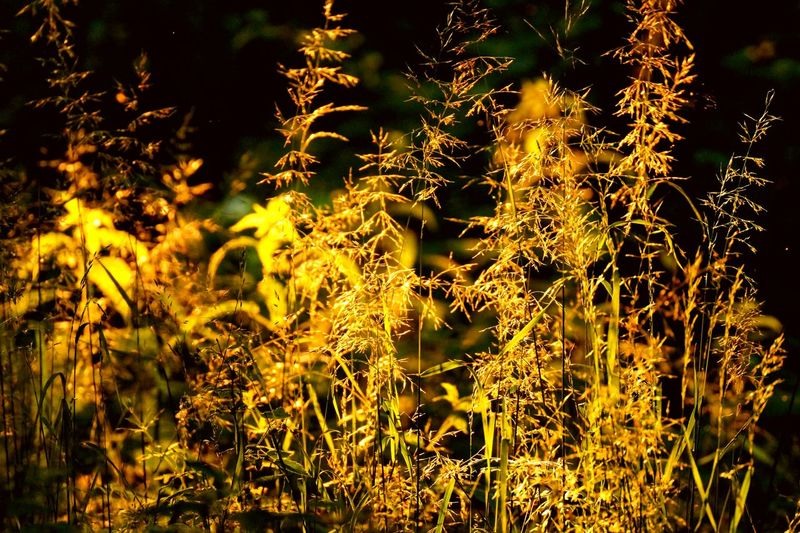 Close-up Growth Illuminated Full Frame Plant Glowing Nature Scenics Beauty In Nature Outdoors Focus On Foreground Uncultivated Tranquility Fragility