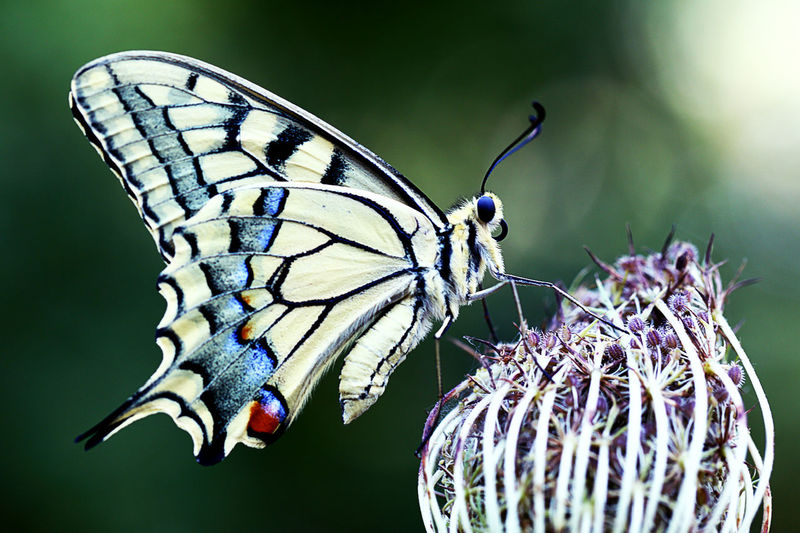 It's time for beautiful pictures of my lens Insect Macro  Nice View Beauty In Nature Butterfly Butterfly - Insect Flower Insect Insect Photography Lens Zoom Macro Nice