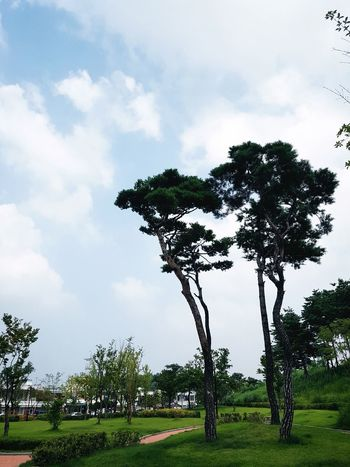 Tree Social Issues Nature No People Landscape Single Tree Sky Beauty In Nature Outdoors Day Suwon, Korea Park