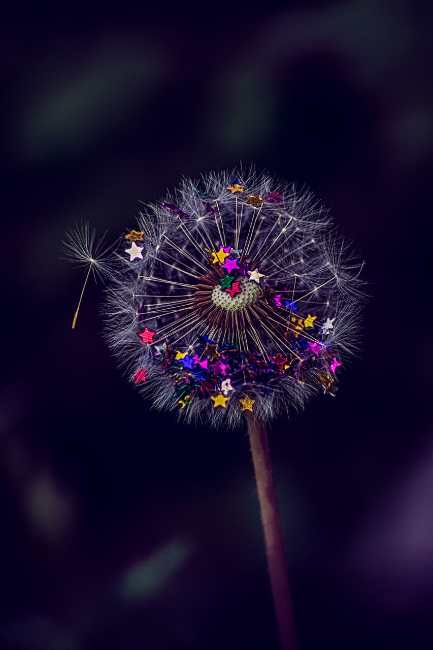 flower, fragility, focus on foreground, nature, flower head, close-up, no people, beauty in nature, purple, plant, growth, outdoors, petal, freshness, night, sky