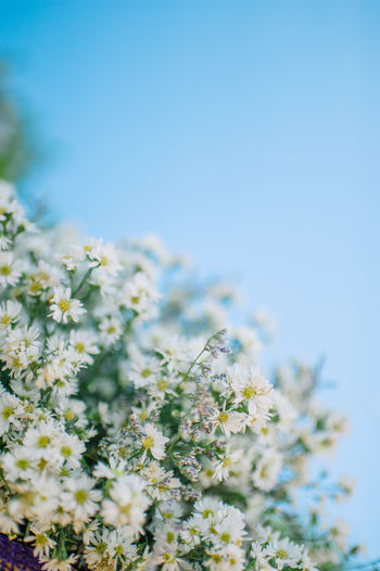 Close-up of fresh flowers against clear sky