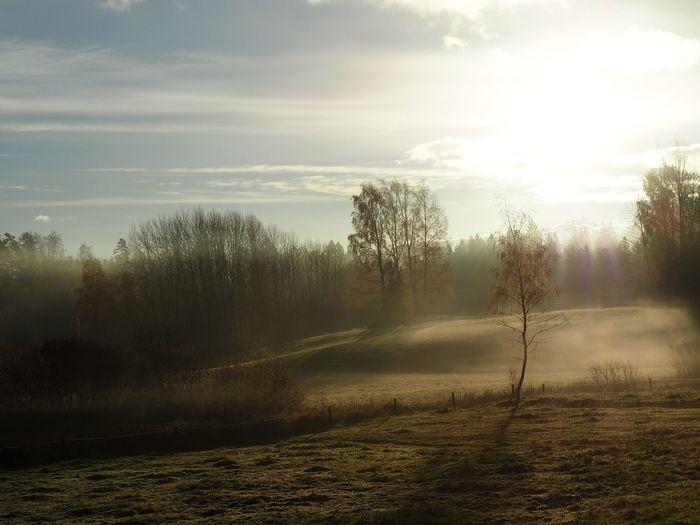 Mist Sunlight
