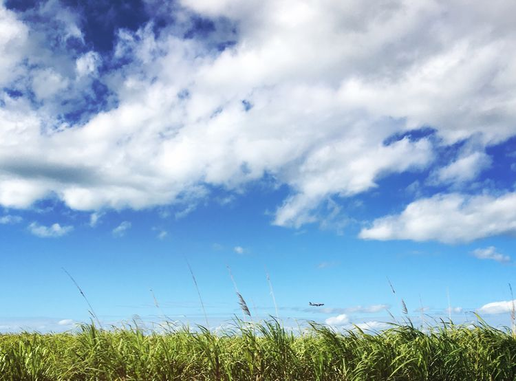 Sugarcane Field Cairns, North Queensland, Australia Sky And Clouds TakeoverContrast Tourism Nature Photography Scenery Remote Nature Beauty In Nature Rural Scene Scenics Tranquility Solitude Cloud - Sky Tranquil Scene Landscape Travel Australia Outdoors