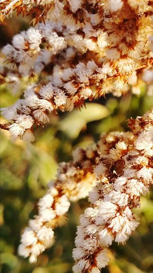 Nature Sunlight Springtime Growth Grass Close-up Flower Outdoors Beauty In Nature Plant No People Branch Wildflower Tree Ecosystem  Day f Frosty Mornings Frost Grass