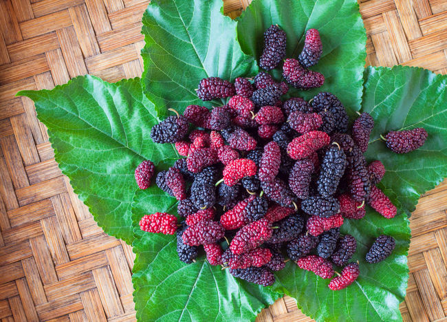 Mulberry in threshing basket Close-up Food And Drink Freshness Fruit Green Color Mulberry Nature Pink Color Plant Red