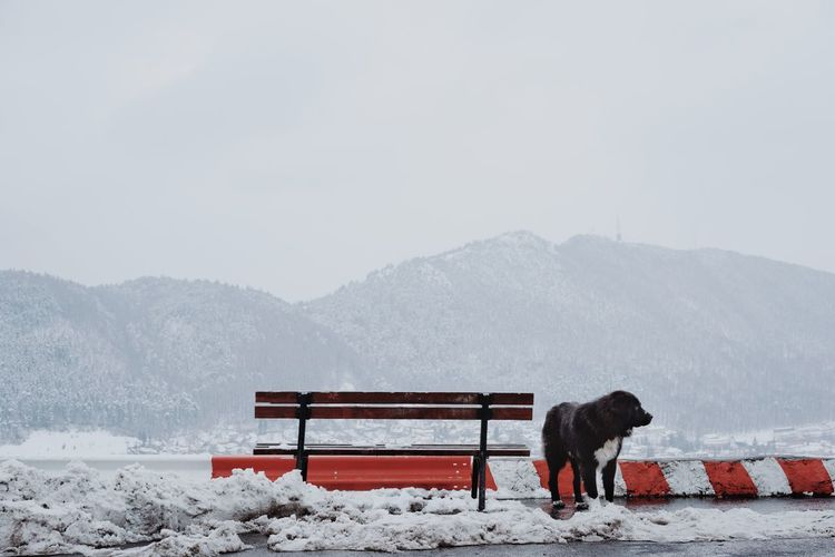 Dog on snowcapped mountains against sky