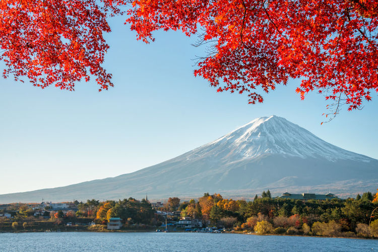 Red maple leaves with Fuji mountain and lake Kawaguchiko in the background. Japan Kawaguchiko Sunlight Autumn Beauty In Nature Branch Change Clear Sky Day Fuji Leaf Maple Leaf Momiji Mountain Mountain Range Nature No People Outdoors Scenics Sky Tranquil Scene Tranquility Tree Water