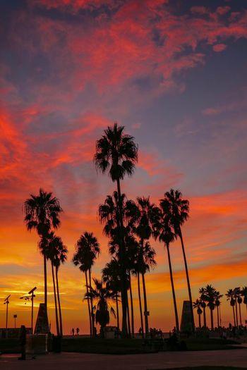 Dreamy LA skies