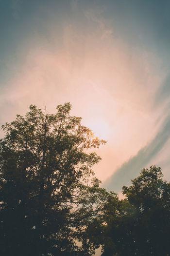 Sunset Beauty