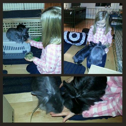 Stas med kaniner! KaninerUtenBur CageFree Bunnies Rabbits